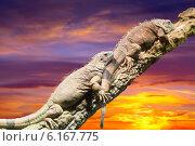 Купить «lizards in sunset», фото № 6167775, снято 23 марта 2019 г. (c) Яков Филимонов / Фотобанк Лори