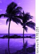 Купить «coconut tree silhouette on the beach», фото № 6170251, снято 17 января 2010 г. (c) Syda Productions / Фотобанк Лори
