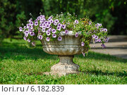 Купить «Большая каменная ваза с цветами в парке», фото № 6182839, снято 22 июля 2014 г. (c) Сергей Старуш / Фотобанк Лори