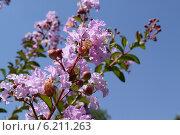 Купить «Цветы лиловые на голубом фоне неба», фото № 6211263, снято 19 июля 2014 г. (c) Рамиль Усманов / Фотобанк Лори