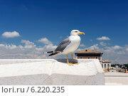Чайка. Стоковое фото, фотограф OksanaOkss / Фотобанк Лори