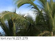 Купить «Белая цапля сидит на ветке пальмы на фоне синего неба», фото № 6221279, снято 29 сентября 2013 г. (c) Владимир Ходатаев / Фотобанк Лори