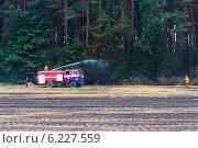 Обгоревший лес. Стоковое фото, фотограф Галина Нагаева / Фотобанк Лори