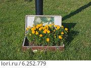 Купить «Цветочный вазон из старого чемодана», эксклюзивное фото № 6252779, снято 1 августа 2014 г. (c) Александр Щепин / Фотобанк Лори