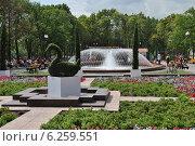 Купить «Ландшафтное оформление у фонтана в Новопушкинском сквере в Москве», эксклюзивное фото № 6259551, снято 8 августа 2014 г. (c) lana1501 / Фотобанк Лори
