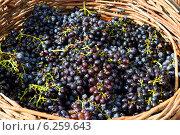 Спелый виноград в корзине. Стоковое фото, фотограф VahanN / Фотобанк Лори