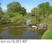 Река Протва в мае (2011 год). Стоковое фото, фотограф Голов Евгений Юрьевич / Фотобанк Лори