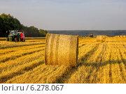 Трактор в поле собирает солому, формируя ее в рулоны. Стоковое фото, фотограф Артем Федин / Фотобанк Лори