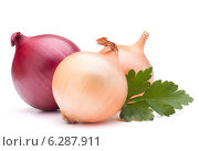 Купить «Onion vegetable bulb and parsley leaves still life», фото № 6287911, снято 15 февраля 2013 г. (c) Natalja Stotika / Фотобанк Лори