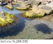 Море у мыса Сарыч в Крыму. Стоковое фото, фотограф Луиза Варфоломеева / Фотобанк Лори