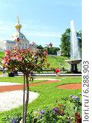 Цветы в Петергофе (2014 год). Редакционное фото, фотограф Ольга Черепенина / Фотобанк Лори