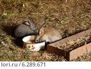 Купить «Крольчата едят из кормушки», фото № 6289671, снято 18 мая 2014 г. (c) Вадим Орлов / Фотобанк Лори
