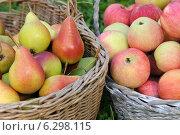Купить «Яблоки и груши в корзине», эксклюзивное фото № 6298115, снято 17 августа 2014 г. (c) Юрий Морозов / Фотобанк Лори