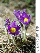 Купить «Сон трава», фото № 6301179, снято 2 мая 2013 г. (c) Зудин Виталий Владимирович / Фотобанк Лори