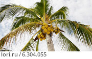 Купить «Palm tree over blue sky with white clouds», видеоролик № 6304055, снято 30 июля 2014 г. (c) Syda Productions / Фотобанк Лори