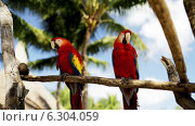 Купить «Close up of two red parrots sitting on perch», видеоролик № 6304059, снято 30 июля 2014 г. (c) Syda Productions / Фотобанк Лори