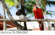 Купить «Close up of red parrot sitting on perch», видеоролик № 6304063, снято 30 июля 2014 г. (c) Syda Productions / Фотобанк Лори