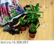 Купить «Пересадка растений», фото № 6308051, снято 24 июня 2014 г. (c) Татьяна Ляпи / Фотобанк Лори