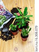 Купить «Пересадка растений», фото № 6308079, снято 24 июня 2014 г. (c) Татьяна Ляпи / Фотобанк Лори