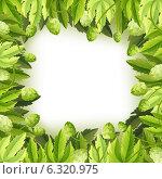 Купить «Рамка из листьев и шишек хмеля», иллюстрация № 6320975 (c) Алексей Тельнов / Фотобанк Лори