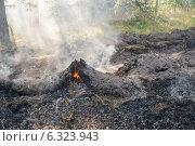 Купить «Лесной пожар летом», фото № 6323943, снято 10 августа 2014 г. (c) Владимир Шевцов / Фотобанк Лори