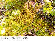 Осенний мох в лесу. Стоковое фото, фотограф Oleksii Pyltsyn / Фотобанк Лори