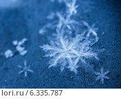 Купить «Снежинки крупно, макро в холодных тонах», фото № 6335787, снято 26 января 2014 г. (c) Горшков Игорь / Фотобанк Лори