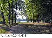 Купить «Углич. Дорога в летнем парке», фото № 6344411, снято 6 августа 2014 г. (c) Александр Замараев / Фотобанк Лори
