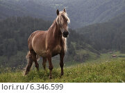 Лошадь на фоне гор. Стоковое фото, фотограф Фомина Марина / Фотобанк Лори