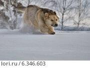 Игры на снегу. Стоковое фото, фотограф Фомина Марина / Фотобанк Лори