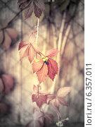 Купить «Осенний фон с красными листьями», фото № 6357011, снято 12 сентября 2013 г. (c) Елена Вяселева / Фотобанк Лори