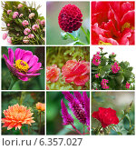 Купить «Коллаж с розовыми и красными декоративными садовыми цветами», фото № 6357027, снято 21 января 2019 г. (c) Елена Вяселева / Фотобанк Лори
