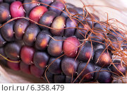Купить «Зёрна цветной кукурузы крупным планом», фото № 6358479, снято 23 августа 2014 г. (c) V.Ivantsov / Фотобанк Лори