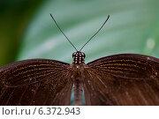 Купить «Close-up of a butterfly at Butterfly Palace, Branson, Taney County, Missouri, USA», фото № 6372943, снято 19 октября 2018 г. (c) Ingram Publishing / Фотобанк Лори