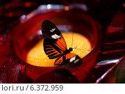 Купить «Close-up of a butterfly at Butterfly Palace, Branson, Taney County, Missouri, USA», фото № 6372959, снято 19 октября 2018 г. (c) Ingram Publishing / Фотобанк Лори