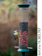 Купить «A blue tit on a bird feeder», фото № 6383767, снято 20 августа 2019 г. (c) Ingram Publishing / Фотобанк Лори