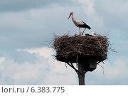 Купить «A White Stork nesting on a man macde nest», фото № 6383775, снято 23 июля 2019 г. (c) Ingram Publishing / Фотобанк Лори