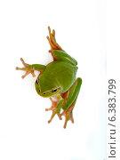 Купить «A portrait of a green frog. Isolated on a white background», фото № 6383799, снято 18 июля 2019 г. (c) Ingram Publishing / Фотобанк Лори