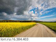 Дорога вдоль цветущего рапсового поля. Эстония (2012 год). Стоковое фото, фотограф Andrei Nekrassov / Фотобанк Лори