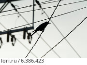 Купить «Silhouette of a bird perching on a wire, Sayulita, Nayarit, Mexico», фото № 6386423, снято 9 декабря 2019 г. (c) Ingram Publishing / Фотобанк Лори