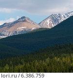 Купить «Pine trees in a forest, Jasper National Park, Alberta, Canada», фото № 6386759, снято 17 июня 2019 г. (c) Ingram Publishing / Фотобанк Лори