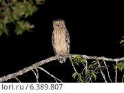 Купить «Buffy fish owl out hunting», фото № 6389807, снято 21 марта 2019 г. (c) Ingram Publishing / Фотобанк Лори