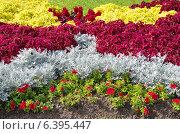 Купить «Цветочная клумба из однолетников», эксклюзивное фото № 6395447, снято 8 сентября 2014 г. (c) Елена Коромыслова / Фотобанк Лори