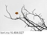 Последний лист. Стоковое фото, фотограф Антон Каменский / Фотобанк Лори