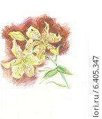 Купить «Лилия. Графика», иллюстрация № 6405347 (c) Emmerdeur / Фотобанк Лори