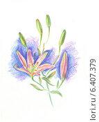 Купить «Лилия. Графика», иллюстрация № 6407379 (c) Emmerdeur / Фотобанк Лори