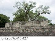 Купить «Ruins at an archaeological site, Copan, Copan Ruinas, Copan Department, Honduras», фото № 6410427, снято 3 января 2013 г. (c) Ingram Publishing / Фотобанк Лори