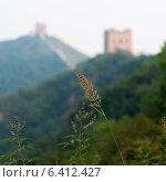 Купить «Plant with Jinshanling to Simatai section of Great Wall Of China in the background, Miyun County, Beijing, China», фото № 6412427, снято 26 августа 2012 г. (c) Ingram Publishing / Фотобанк Лори