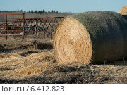 Harvested hay bale in a field, Manitoba, Canada. Стоковое фото, агентство Ingram Publishing / Фотобанк Лори