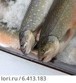 Купить «Fish on ice for sale at Pike Place Market, Seattle, Washington State, USA», фото № 6413183, снято 3 апреля 2013 г. (c) Ingram Publishing / Фотобанк Лори